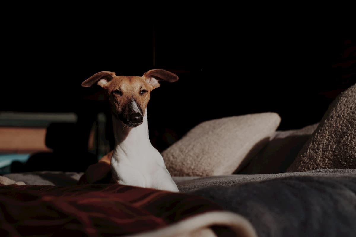 Imagen de un perro tomando el sol